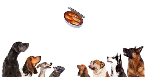 can dogs eat sardines