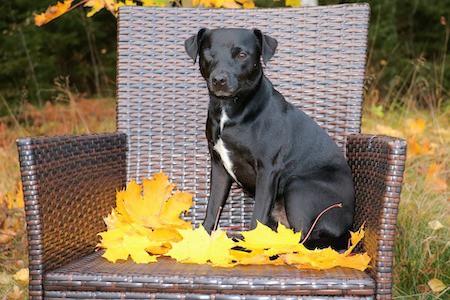 Patterdale Terrier 1