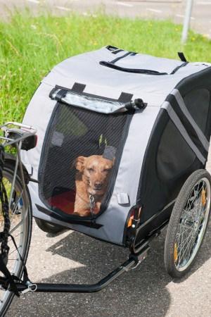 Bike transport for dogs