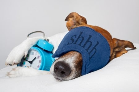 Dog sleeping with alarm clock and sleeping mask