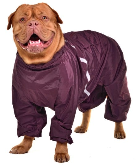 Smiling dog dressed with wine red raincoat isolated