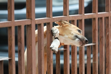 Dog stuck at the door