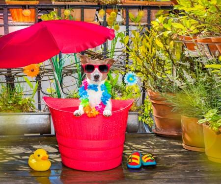 Dog in a bathtub or bucket refreshing in summer