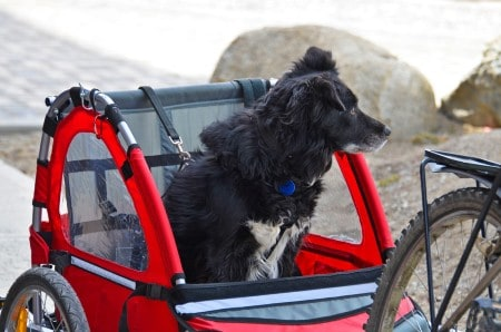 Itizen transports dog on Bicycle in special trailer