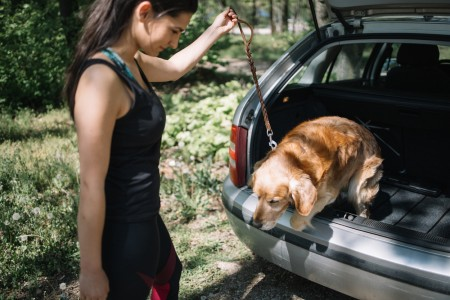 Dog jumping from trunk while girl is holding his leas