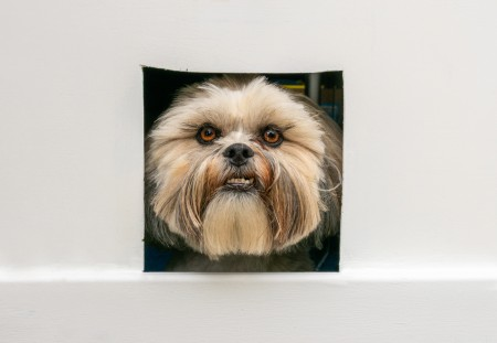 Dog looking through a flap