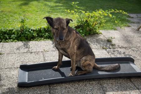 Dog on the ramp