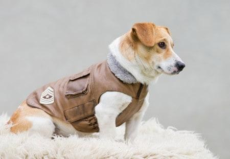 Dog wearing a jacket