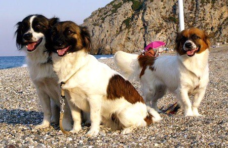 Kokoni dogs on the shore