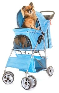 Pushchair for chihuahua
