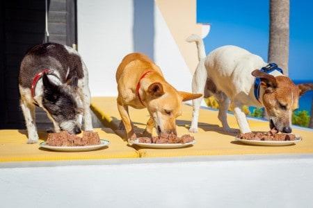 Three dogs eating raw dog food