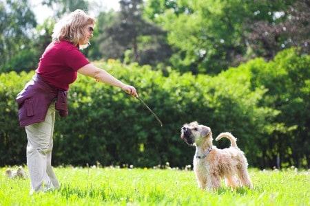 woman and her Irish soft coated wheaten terrier