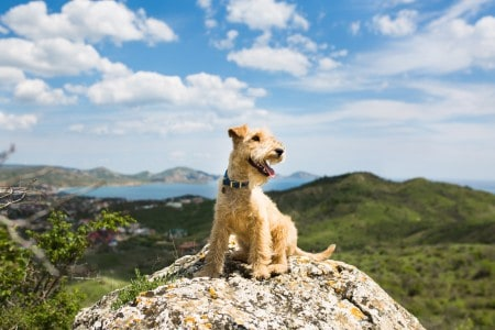 Dog sitting on a rock in the mountains on the background of the sea