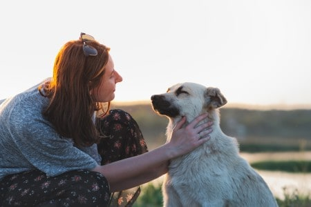 Woman pets dog in the nature at sunset