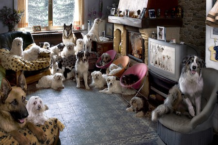 dogs in a living room in front of a TV