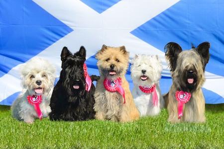 scottish dog breeds in a Scotland event