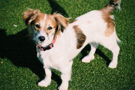 Mixed-breed UK dog