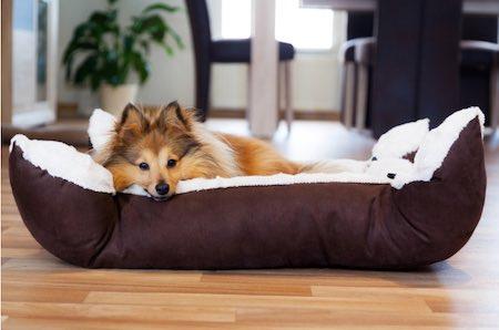 brown dog sleepy on dog bed