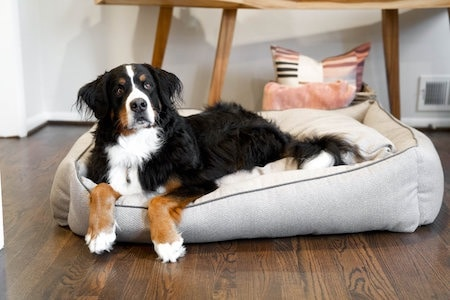 black dog sitting on dog bed