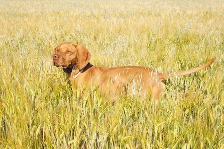 dog with tracker standing on grass