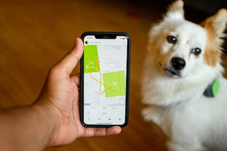 white dog looking at mobile phone