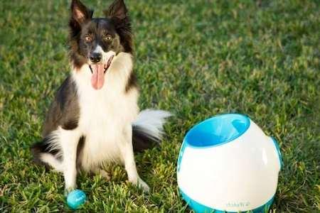 dog beside a ball launcher
