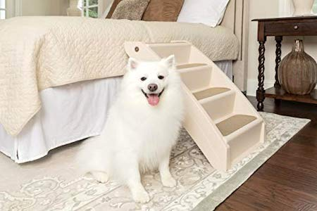 white dog beside stairs