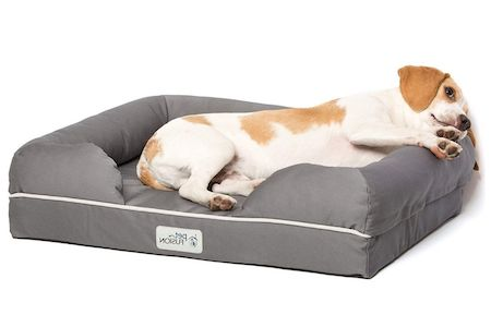dog lying on gray bed