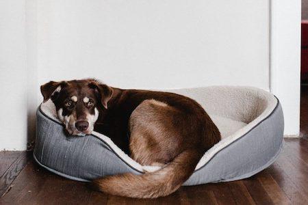 brown dog sleeping in bed