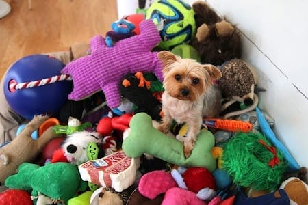 dog with full of toys