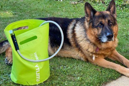 dog sitting beside portable dog shower