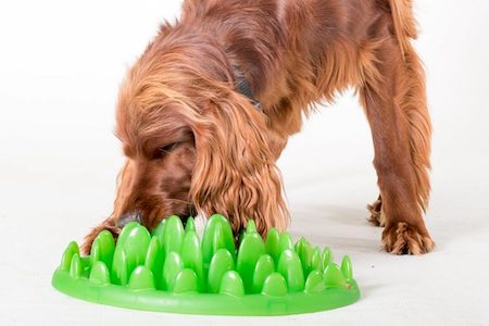 brown dog with green food bowl